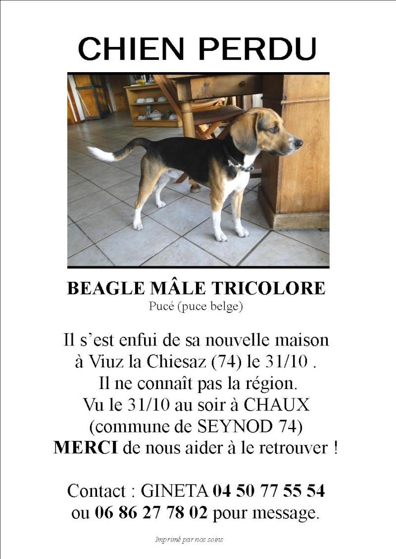 [Perdu] Beagle Viuz-la-Chiesaz (74) Recher11