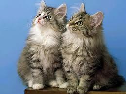 Informazioni sui gatti