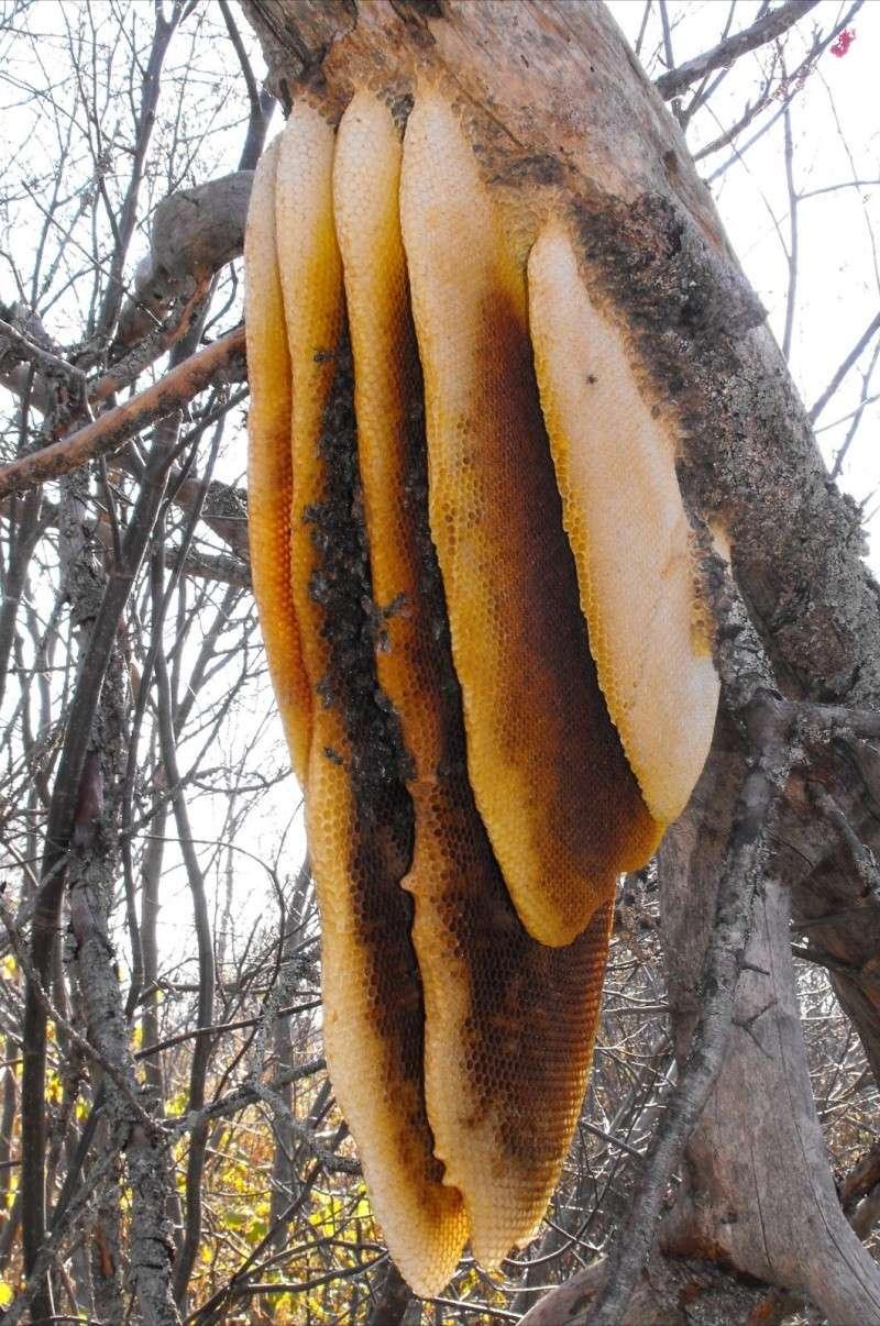Qui fabrique cette 'ruche' ? Ruche_11