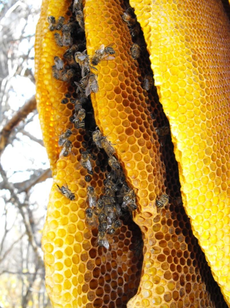 Qui fabrique cette 'ruche' ? Ruche_13