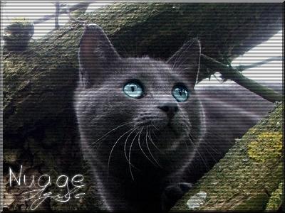 Petite Pluie ~ Nuage Agile ~ Poussière de Pluie ~ Etoile Agile  66701910