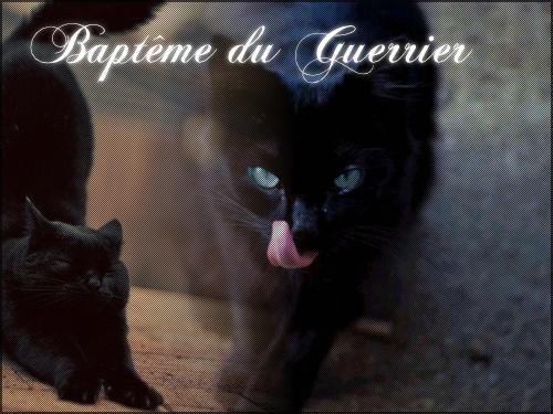 Patte de Bouleau ~ Nuage de Bouleau ~ Coeur de Bouleau Guerri10