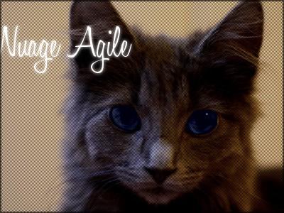 Petite Pluie ~ Nuage Agile ~ Poussière de Pluie ~ Etoile Agile  Nuage_12