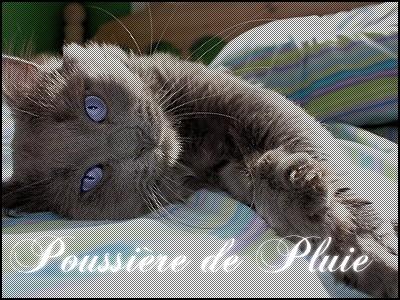 Petite Pluie ~ Nuage Agile ~ Poussière de Pluie ~ Etoile Agile  Pp10