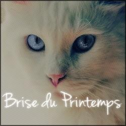 Patte du Printemps ~ Nuage du Printemps ~ Brise du Printemps Primpt12