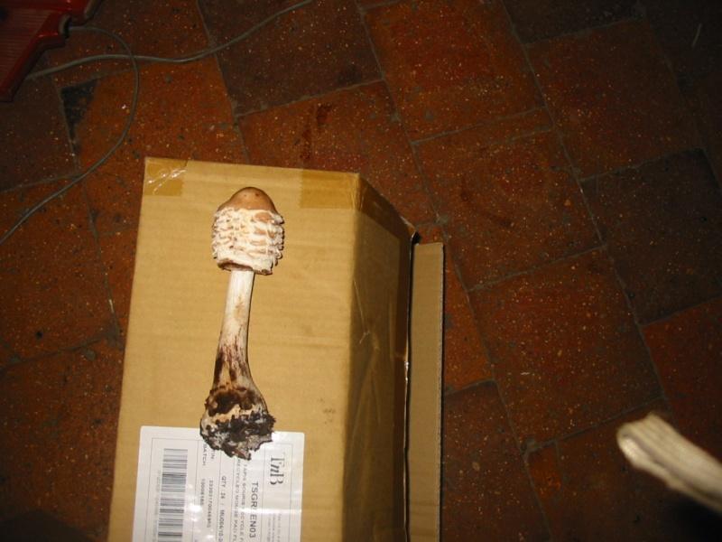 champignons Img_7610