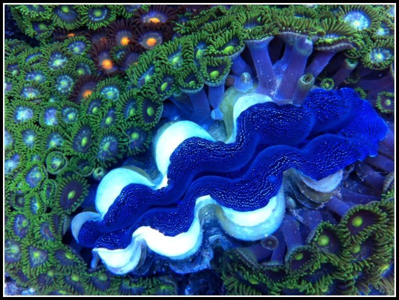 photos de poissons et coraux  - Page 3 Photos13