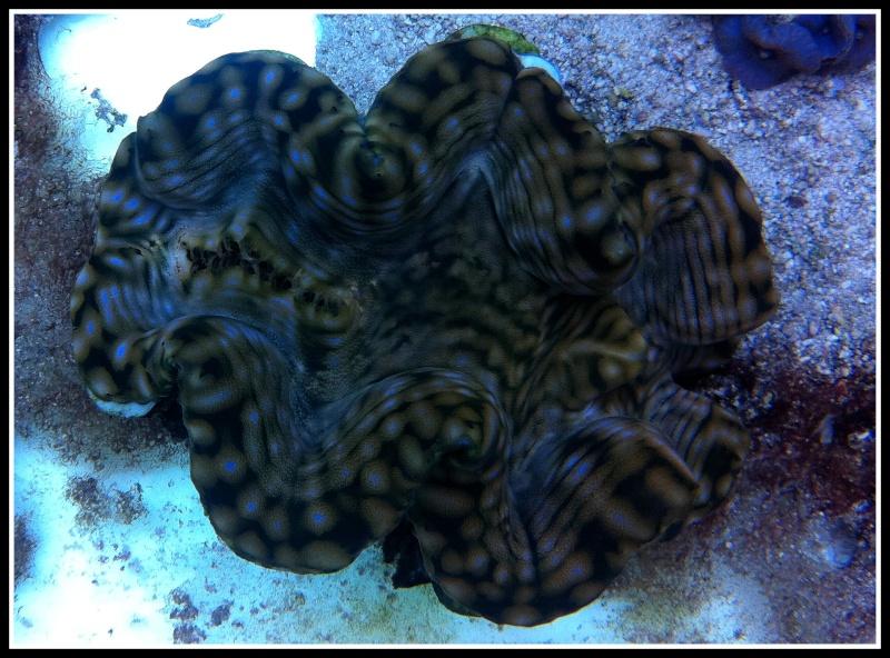 photos de poissons et coraux  - Page 3 Photos14