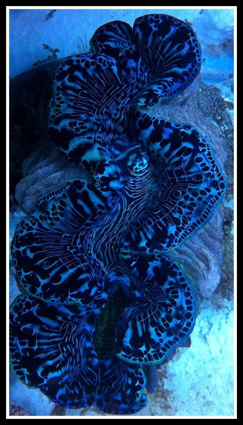 photos de poissons et coraux  - Page 3 Photos15