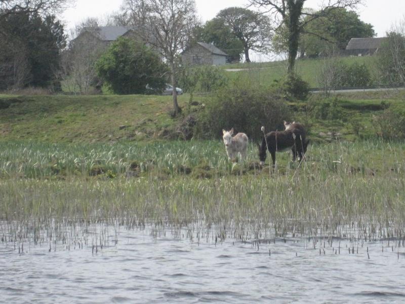Séjour irlandais 2  Img_2013