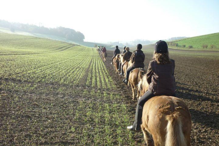 Le cheval islandais entre Seine et Bray