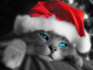 Joyeux Noël Chat10