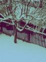 Schnee ;) - Seite 2 Winter10