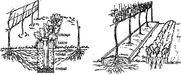 Выращивание винограда Dddddn12