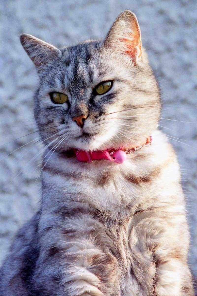 Pourquoi les chats disparaissent-ils ? Mercre11