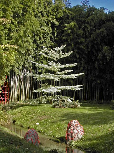 bambouseraie anduze Cornus10