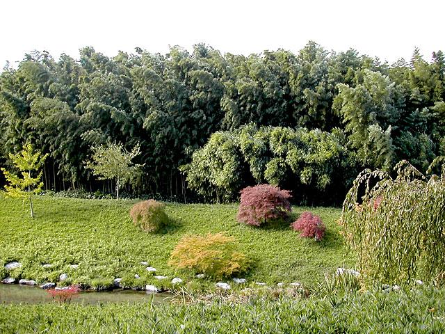 bambouseraie anduze Erable10