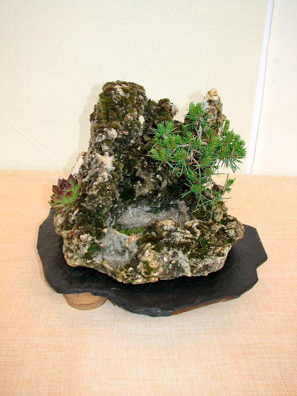 DONZAC (82) 19 et 20 mai 2012 exposition regionale de bonsai Img_0014