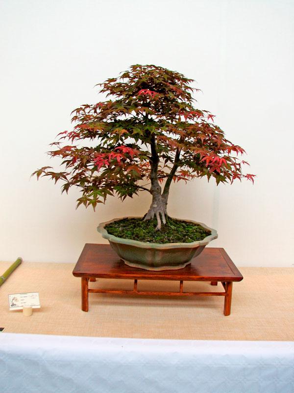 DONZAC (82) 19 et 20 mai 2012 exposition regionale de bonsai Img_0016