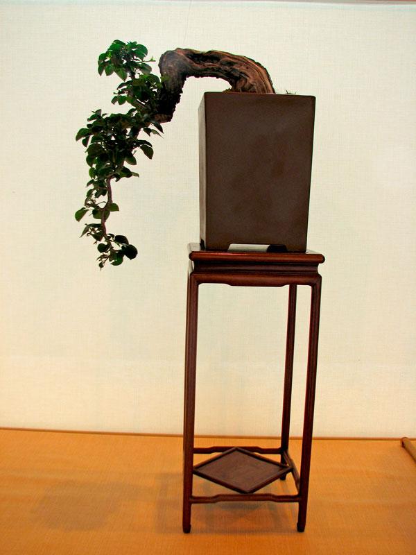 DONZAC (82) 19 et 20 mai 2012 exposition regionale de bonsai Img_0022