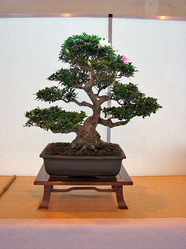 DONZAC (82) 19 et 20 mai 2012 exposition regionale de bonsai Img_0023