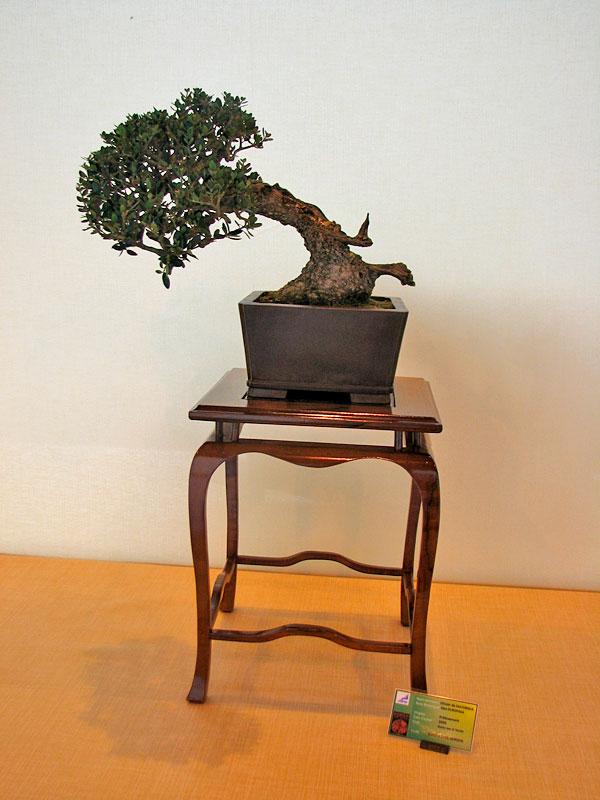 DONZAC (82) 19 et 20 mai 2012 exposition regionale de bonsai Img_0031