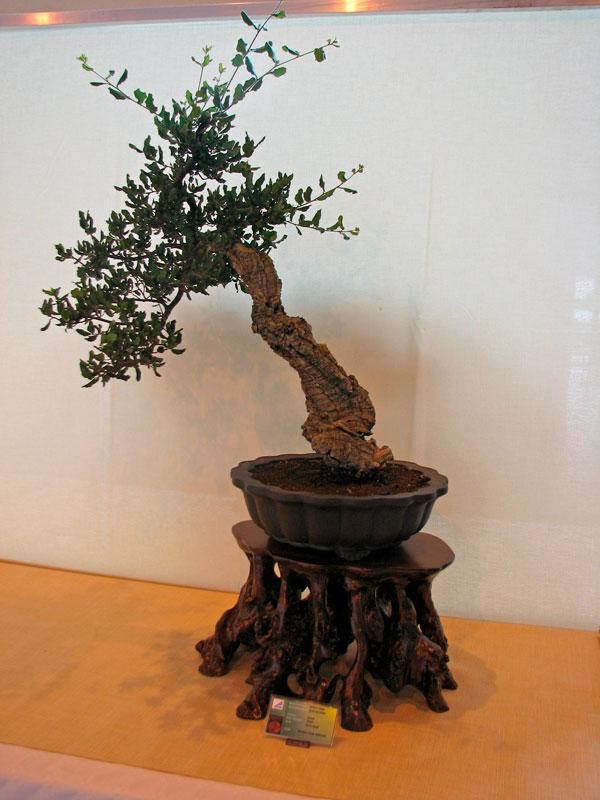 DONZAC (82) 19 et 20 mai 2012 exposition regionale de bonsai Img_0034