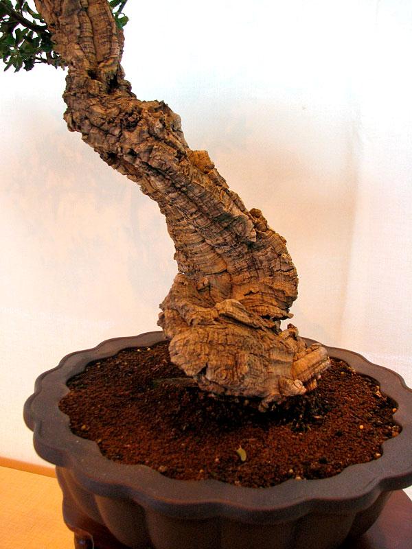 DONZAC (82) 19 et 20 mai 2012 exposition regionale de bonsai Img_0035