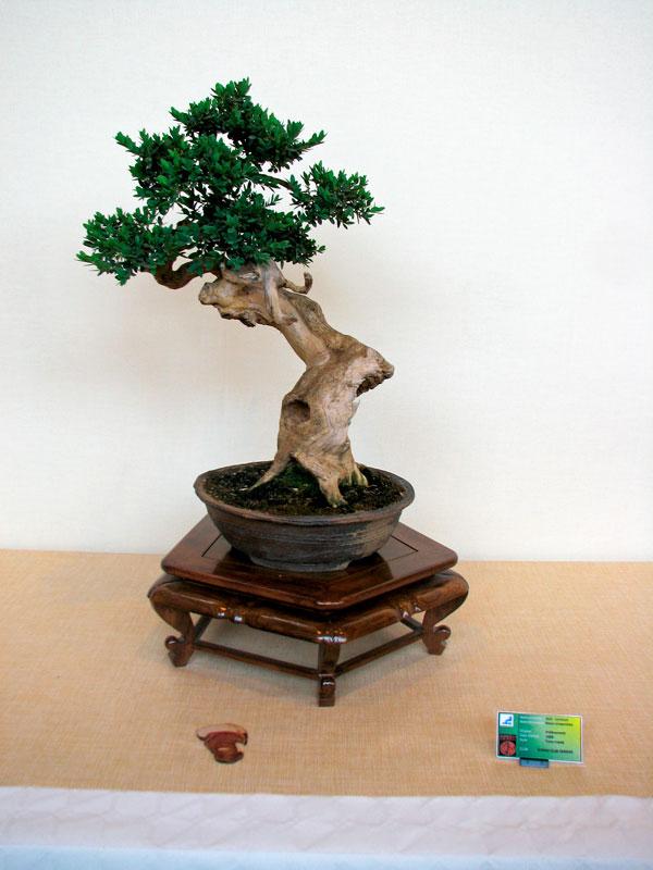 DONZAC (82) 19 et 20 mai 2012 exposition regionale de bonsai Img_0036