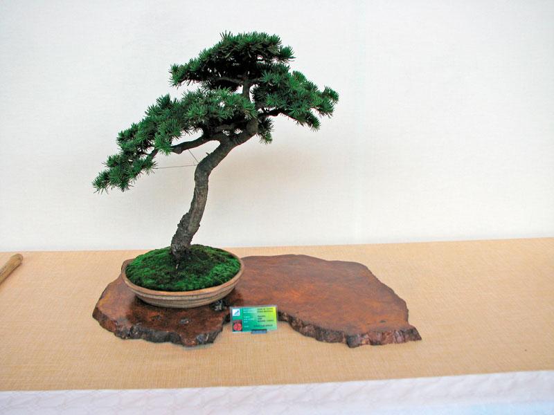 DONZAC (82) 19 et 20 mai 2012 exposition regionale de bonsai Img_0037