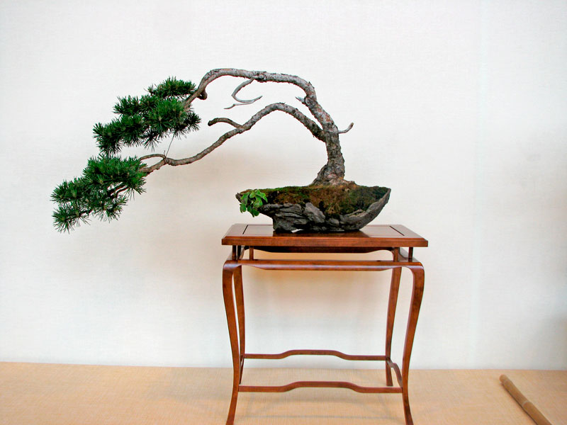 DONZAC (82) 19 et 20 mai 2012 exposition regionale de bonsai Img_0038