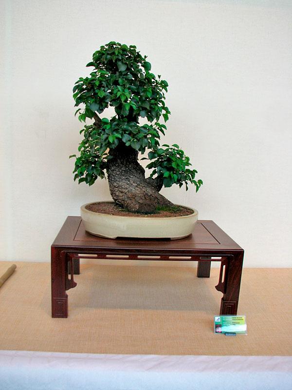 DONZAC (82) 19 et 20 mai 2012 exposition regionale de bonsai Img_0039