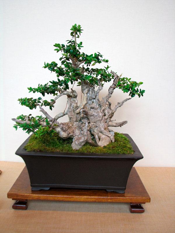 DONZAC (82) 19 et 20 mai 2012 exposition regionale de bonsai Img_0044