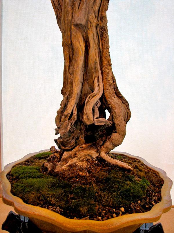 DONZAC (82) 19 et 20 mai 2012 exposition regionale de bonsai Img_0046