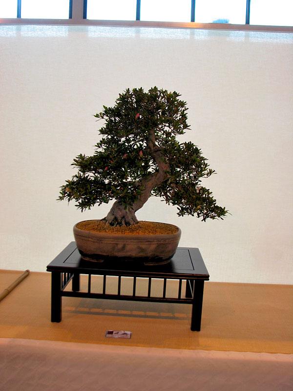 DONZAC (82) 19 et 20 mai 2012 exposition regionale de bonsai Img_0048