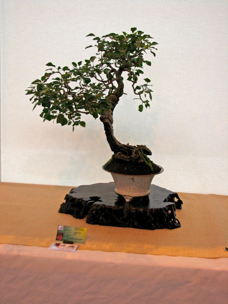 DONZAC (82) 19 et 20 mai 2012 exposition regionale de bonsai Img_0051