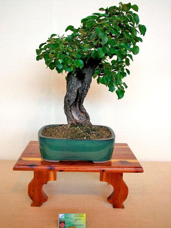 DONZAC (82) 19 et 20 mai 2012 exposition regionale de bonsai Img_0055