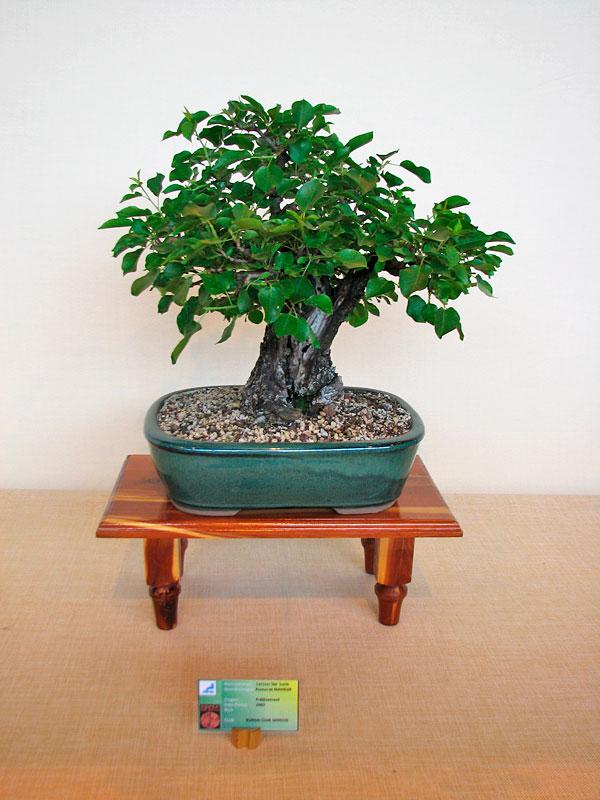 DONZAC (82) 19 et 20 mai 2012 exposition regionale de bonsai Img_0056