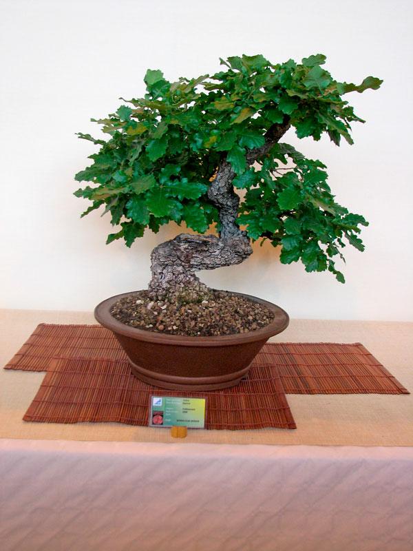 DONZAC (82) 19 et 20 mai 2012 exposition regionale de bonsai Img_0060