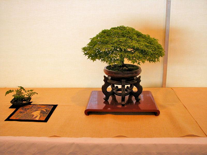 DONZAC (82) 19 et 20 mai 2012 exposition regionale de bonsai Img_0062