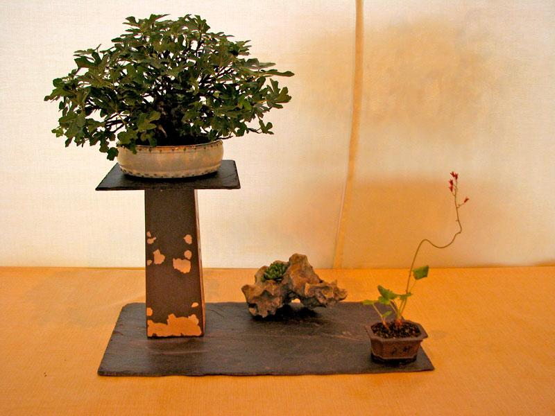 DONZAC (82) 19 et 20 mai 2012 exposition regionale de bonsai Img_0064