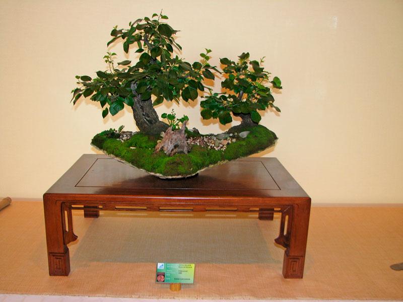 DONZAC (82) 19 et 20 mai 2012 exposition regionale de bonsai Img_0067