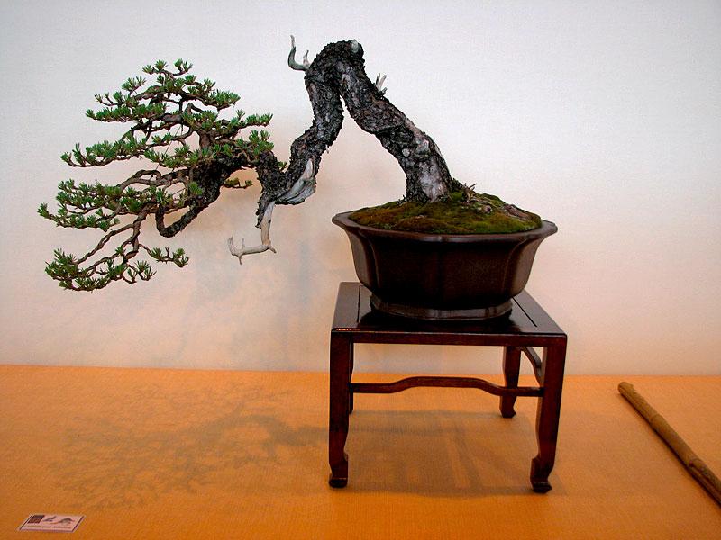 DONZAC (82) 19 et 20 mai 2012 exposition regionale de bonsai Img_0069