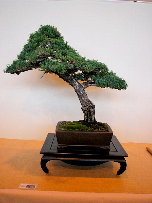 DONZAC (82) 19 et 20 mai 2012 exposition regionale de bonsai Img_0072