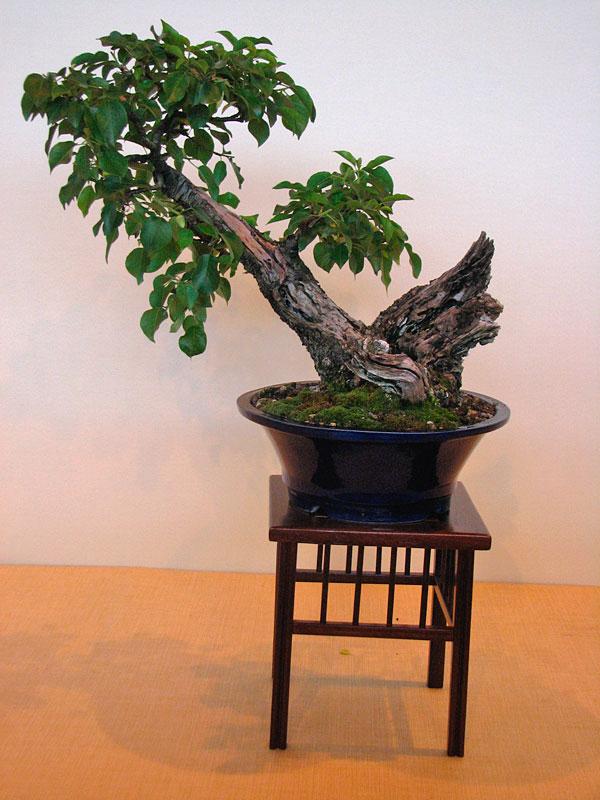 DONZAC (82) 19 et 20 mai 2012 exposition regionale de bonsai Img_0073