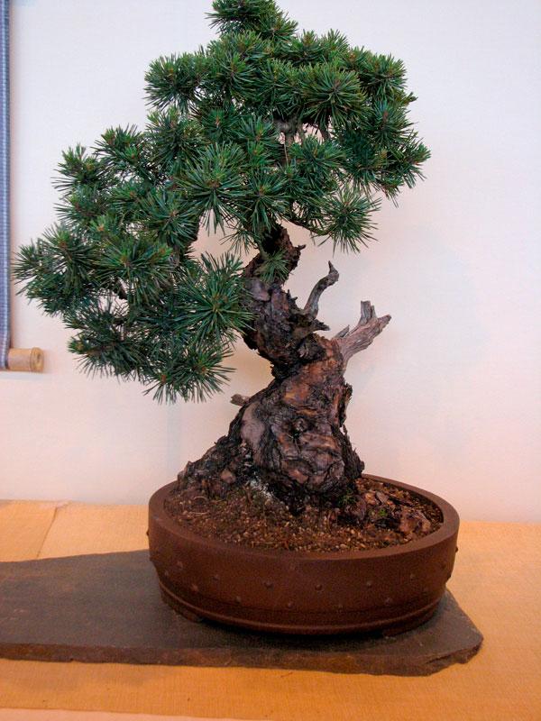 DONZAC (82) 19 et 20 mai 2012 exposition regionale de bonsai Img_0074