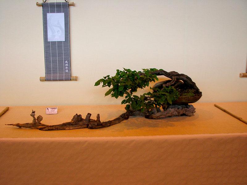 DONZAC (82) 19 et 20 mai 2012 exposition regionale de bonsai Img_0077