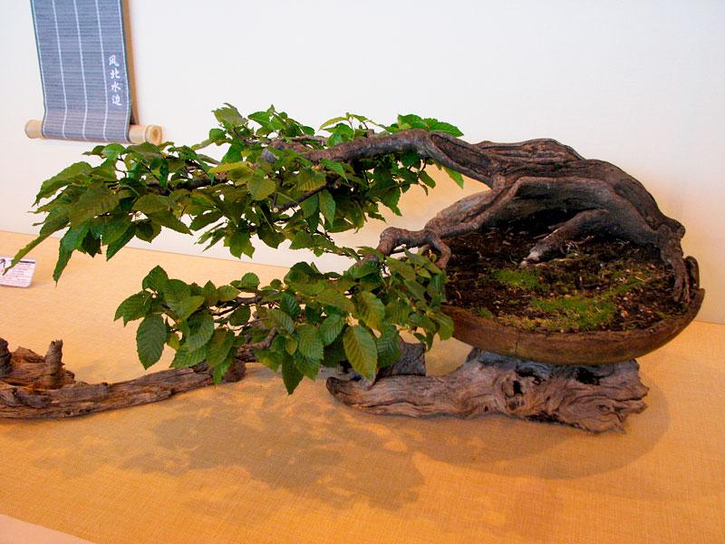 DONZAC (82) 19 et 20 mai 2012 exposition regionale de bonsai Img_0078