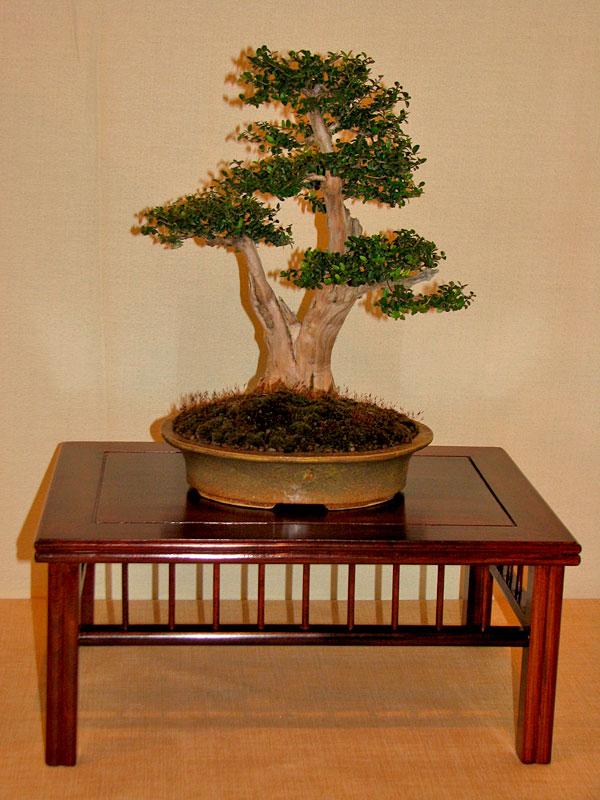 DONZAC (82) 19 et 20 mai 2012 exposition regionale de bonsai Img_0079
