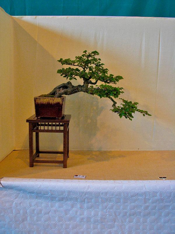 DONZAC (82) 19 et 20 mai 2012 exposition regionale de bonsai Img_0080